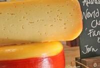 ۱۲ راس گاو برای تولید بهترین پنیر جهان