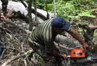 قلع و قمع جنگل&#۸۲۰۴;های زاگرس/ با ژست&#۸۲۰۴;های محیط زیستی