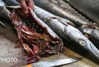 ماهی پلو شب یلدا با طعم کوسه