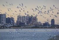 مشاهده آنفولانزای پرندگان در تهران/ مردم تحت هیچ شرایط با پرندگان تماس نداشته باشند