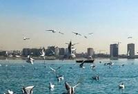 جزئیات مشاهده آنفولانزای پرندگان در تهران