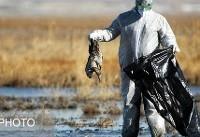 توصیههای وزارت بهداشت درباره آنفلوآنزای پرندگان / از تماس با پرندگان وحشی خودداری کنید