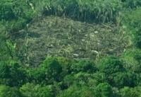 کاهش ۱۳ درصدی جنگلزدایی در آمازون