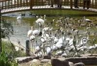 مراقبت ویژه در باغ پرندگان برای جلوگیری از شیوع آنفلوآنزای پرندگان
