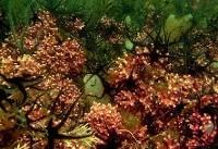 تشدید آلودگی آبها و خطر تجزیه شدن جانداران دریایی