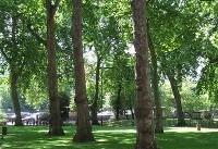 ۷۰ درصد ماموریتهای شهرداری تهران مرتبط با حوزه محیط زیست است