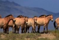 ایران ۶۰ هزار رأس اسب دارد