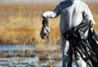 مردم از خرید پرندگان مهاجر خودداری کنند