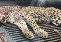 تصویری دردناک از محیط زیست الموت