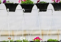 بازار گرم فروش گلهای بهاری / تخفیفهای ویژه در ساعتهای پایانی سال