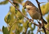 کاهش «فاجعه بار» جمعیت پرندگان فرانسه در پی استفاده از آفتکشها