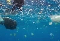 افزایش سه برابری نفوذ مواد پلاستیکی به دریا طی ۱۰ سال