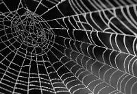 استفاده از تار عنکبوت برای ترمیم استخوان