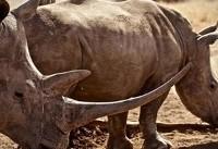 مجازات اعدام برای شکارچیان کنیایی