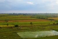 برنج مازندران از بحران آب بینصیب نماند