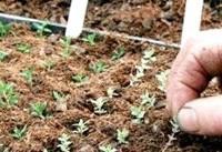 واگذاری ۴ دانش فنی ارقام اصلاحشده جدید زراعی به بخش خصوصی