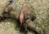 جنایت جدید آل سعود در یمن/ شهادت ۶ غیرنظامی + تصاویر