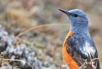 گسترش تجارت آنلاین حیات وحش در اروپا