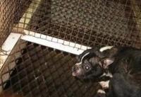 مجازات حبس برای مرد چک به خاطر حیوانآزاری