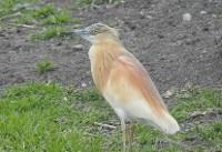 مشاهده و ثبت هفت گونه جدید پرنده در استان چهارمحال و بختیاری