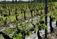 بارش تگرگ باعث خرابی باغها و محصولات شد