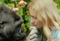 Koko the gorilla death: Primate famous for learning sign language dies, aged 46