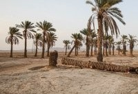 خوزستان مُرد از بس که جان ندارد!/ تشکیل ۱۰۰ هزار هکتار نمک&#۸۲۰۴;زار در ۶ ماه