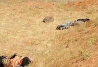ارتش سوریه بیش از ۱۰ نفر از عناصر گروهک
