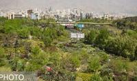 بخشنامه جدید سازمان بوستانها برای ممنوعیت کاشت چمن در تهران