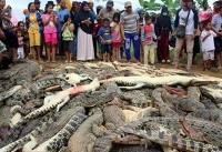 Indonesian villagers kill nearly 300 crocodiles in revenge attack