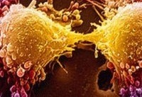 استفاده از تستوسترون در مورد سرطان