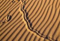 عکس | چیست این خطوط پر راز بر کویر؟