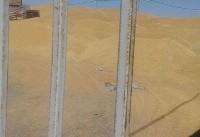 معاونان وزیر جهاد کشاورزی فساد در سازمان غله را پذیرفتند