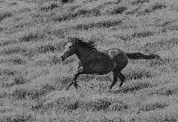 عکس/ کابوس های سیاه و سفید