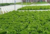 بهره برداری از فاز اول بزرگترین مجتمع گلخانهای ایران در چابهار