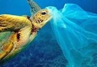 جریمه ۱۰۰ هزار دلاری   پایان عمر کیسه پلاستیکی در نیوزیلند