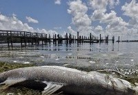 Florida governor declares state of emergency to combat worst red tide in over 10 years