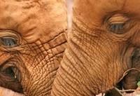 فیلها چگونه سرطان را شکست میدهند و عمر طولانی دارند؟ | امیدواری به درمان سرطان