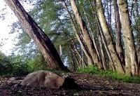 معرفی پارک جنگلی فین در چالوس