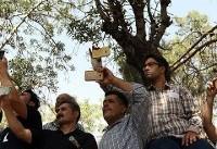 تصاویر | سلفیبگیران حین خاکسپاری مرحوم عزتالله انتظامی