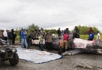 APNewsBreak: Alaska Natives believed whale hunt was legal
