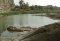 زیستگاه گاندو در کدام استان قرار دارد؟ +ویژگی ها و تصاویر