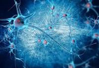 راز کاهش توان شناختی افراد مسن کشف شد