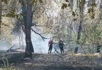 سوختن ۶۰۰ نخل در نخلستانهای شادگان بخاطر آتشسوزی سهوی
