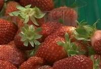 ترس از سوزن خیاطی در استرالیا به سیب و موز رسید
