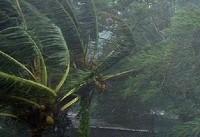 بررسی خسارات طوفان شب گذشته در گلستان/ طوفان گلستان ۱۰ مصدوم و یک کشته برجای گذاشت