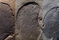 کشف قدیمیترین جانور جهان متعلق به ۵۵۸ میلیون سال پیش