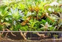 ریز زیستگاهی که یک باغ است!(+فیلم و عکس)
