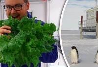 پرورش گیاه در قطب به امید حیات در مریخ