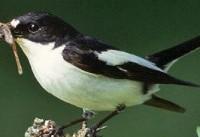 تشدید رقابت مرگبار پرندگان در اثر تغییرات آب و هوایی